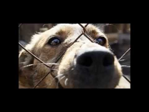 Sochi Olympics: Russia Killing THOUSANDS of Dogs & Cats in Prep for the 2014 OLYMPICS