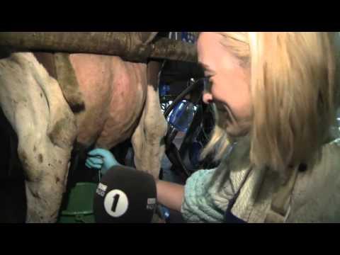 Fearne Cotton milks a cow!