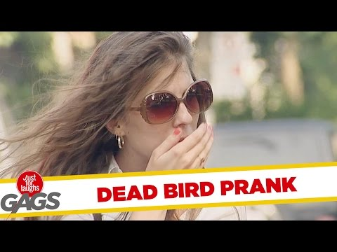 Drop Dead Bird Prank