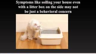 Cat Illnesses - cat care and sick cats