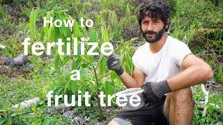 How to fertilize a fruit tree with organic fertilizer
