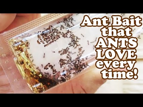 How To Get Rid Of Ants - Terro Ant Liquid Borax Bait Killer Trap - Sugar Black Insects Traps Jazevox