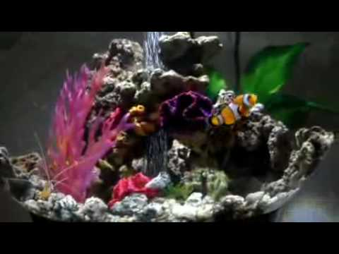 Our BiOrb 60 Marine Tank