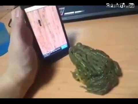 Лягушка ест муравьев из айфона