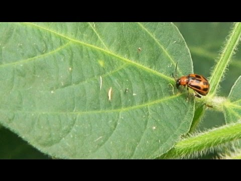 Neonicotinoid Seed Treatments - Tom Hunt - November 14, 2014
