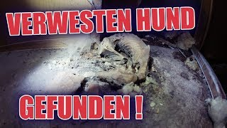 LOSTPLACE : Verwester Hund im Container :O #Teil1 | ItsMarvin
