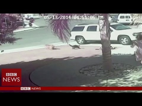 Hero Cat Saves Child From Dog Brutal Attack Hd