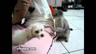 دعوای گربه و سگ عرفان کوشا  (18-)