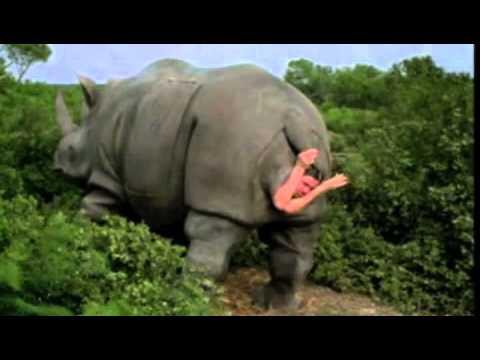 ace ventura 2 rhino birth scene