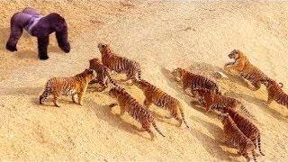 Momentos incríveis da vida selvagem 2018 - Leão, macaco, leopardo, canguru e girafa
