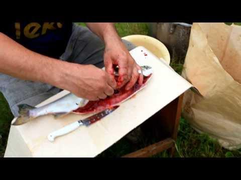 Как добывают красную икру на Сахалине