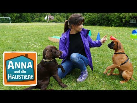 Ein Tag in der Hundeschule | Information für Kinder | Anna und die Haustiere