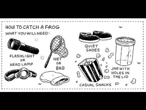 The Uncluded - How to Catch a Frog