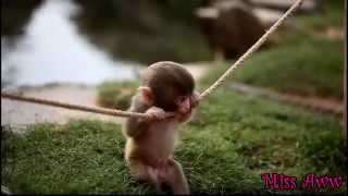 Baby Monkey Playing With Rope - CUTE VIDEO