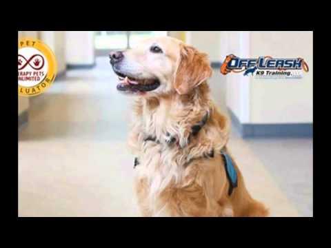 Houston Dog Training service