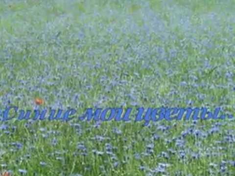 Синие мои цветы...(В.Цыганова)