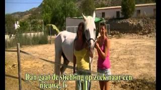 Stichting paard in Nood Spanje, los Caballos Luna