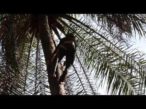 Video Gambia Bissau