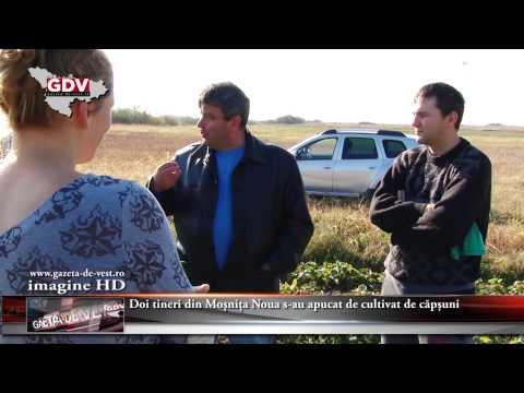 Cultivatori de capsuni   in Romania