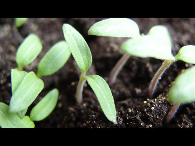 Почва для рассады. Как самому приготовить почву для рассады