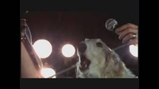 Watch Pink Floyd Seamus video