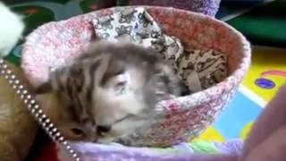 [Little kitten] Video