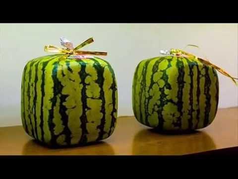 Как вырастить квадратный арбуз своими руками