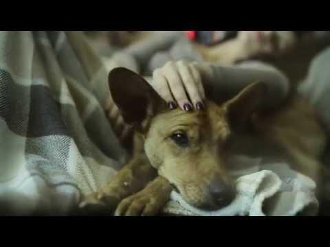 Radics Gigi - Bolond Ez A Város (Official Music Video)