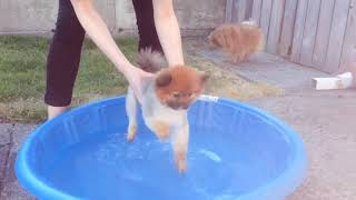 Funny Dogs Playing with Water    Funny Dogs Video