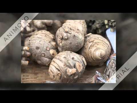 Heilpflanzen Der Traditionellen Thailändischen Medizin