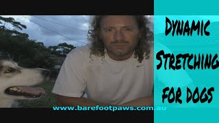 Dynamic Stretches - How to get your dog ready for an after work run without risking injury to either