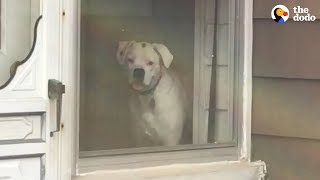 Dog Stalks His Owner From Every Window | The Dodo