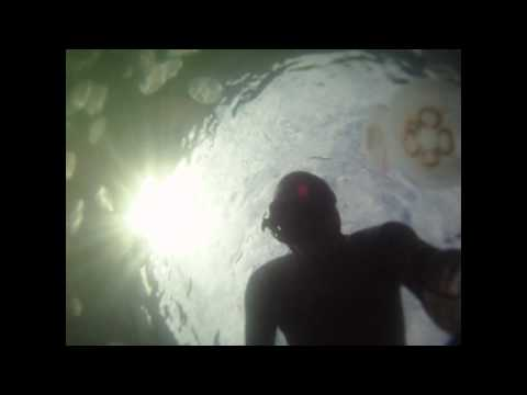 Insane jellyfish swarm freediving