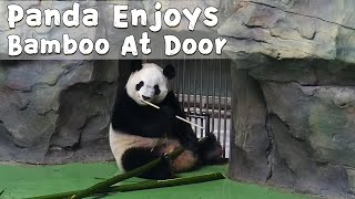Panda Enjoys Bamboo Delivery At Door | iPanda
