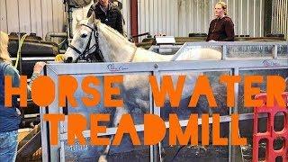 Horse water treadmill