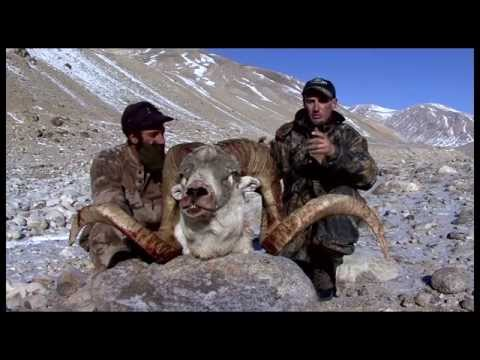 best-asian-hunting-action-marco-polo-ibex-hunt.html