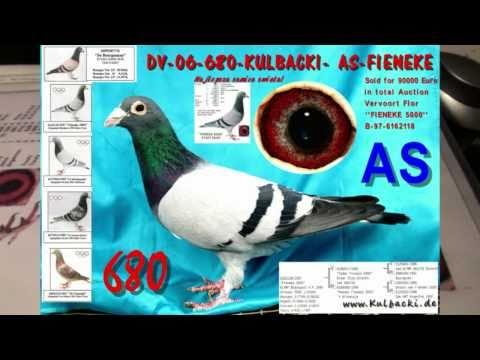 www.Kulbacki.de , Fieneke 5000 , 23x1.kon., 90000 €uro Japan, Kulbacki@t-online.de