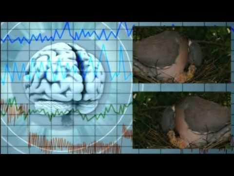 A suivre absolument - La structure de l'œil dont la création est magnifique a fait taire Darwin