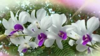 გაზაფხულის სიმღერა
