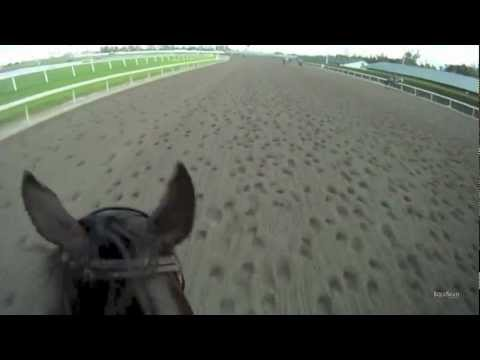 Silver Max Jockey Cam: Training at Gulfstream Park in HD