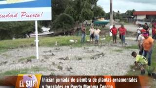 Inician Jornada de siembra de Plantas Ornamentales y Forestales en Puerto Maroma Concha