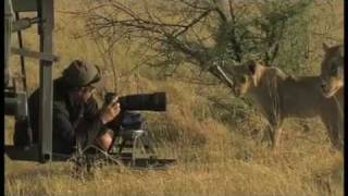 Cameraman and lioness get to know each other