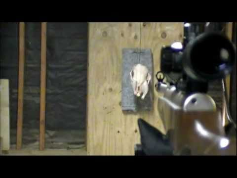 New Gamo PBA Bullet vs. Crosman Destroyer .177 Caliber Shoot-out