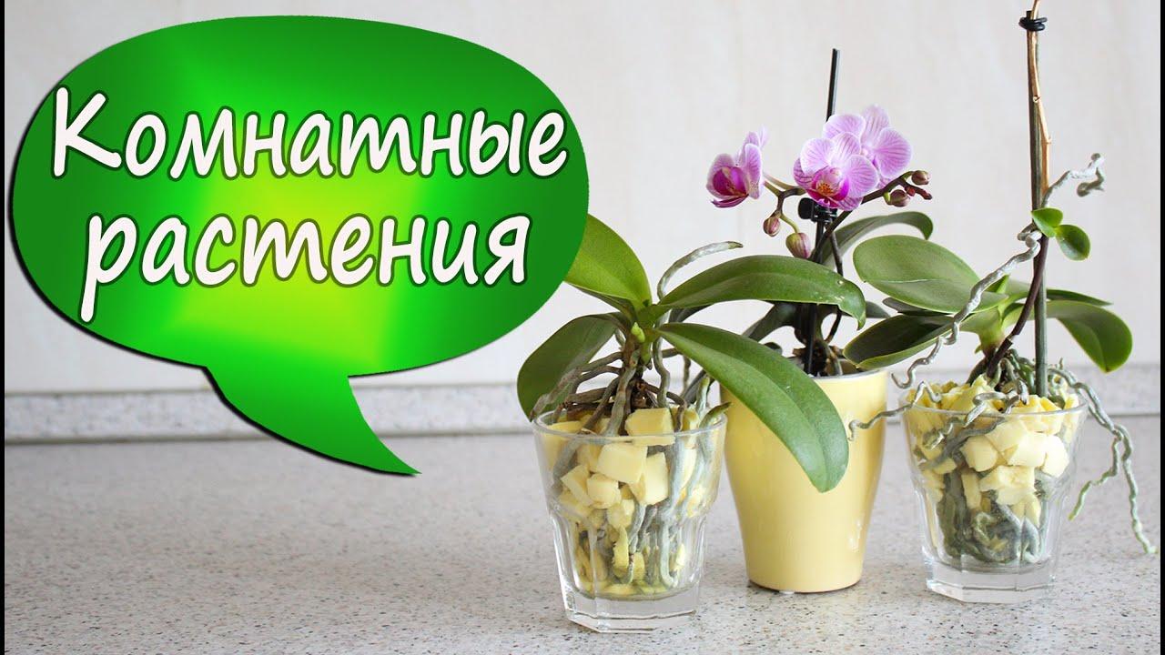 Во что сажают орхидеи 46
