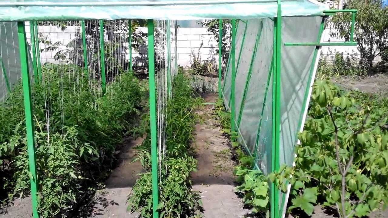 Выращивание помидоров под пленкой 60