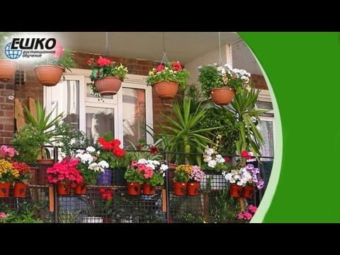 Варианты озеленения террасы – фото