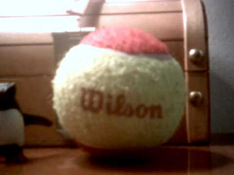 Wilson The Retarted Tennis Ball Comedy Central
