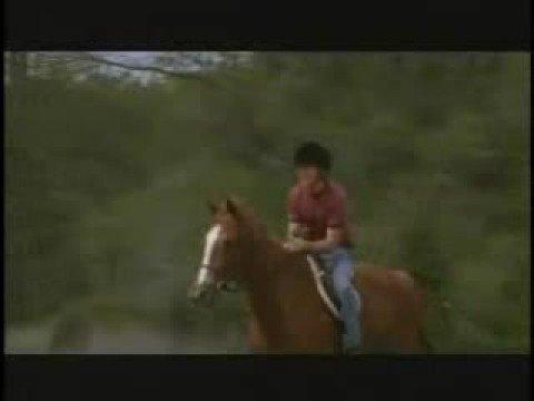 The Derby Stallion Trailer