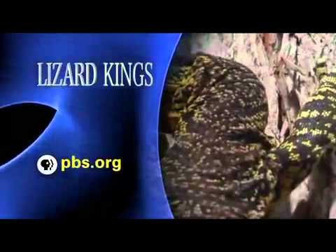 Monitor Lizard Documentary Part 6