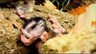 Heart breaking to Janet! Help me Why baby unlucky? Poor Janet fails 2nd Youlike Monkey